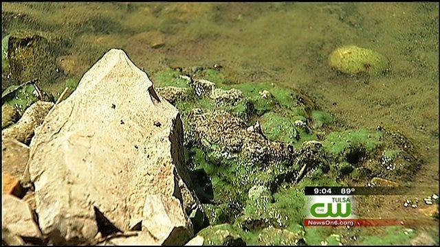 Toxic Blue Green Algae Warnings Posted At Keystone Lake