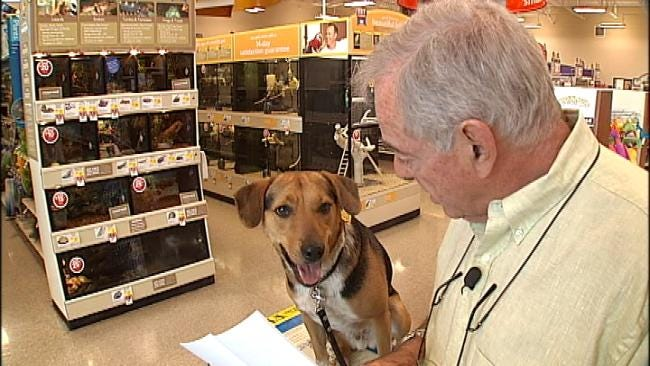 Radar The Weather Dog Goes Shopping For Foster Pup