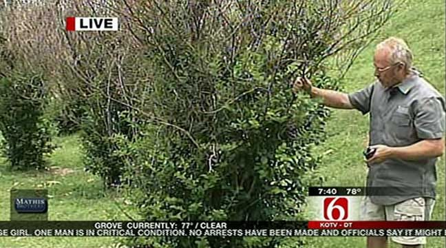 Dirt Dude Steve Smith Shows How To Save Crepe Myrtles