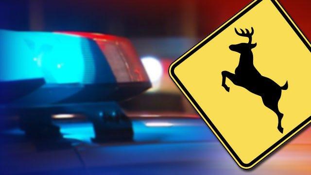 Collisions With Deer Injure Several Oklahomans This Weekend