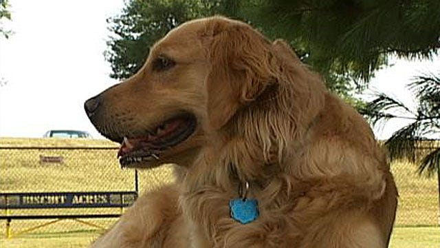 New Off-Leash Area For Dogs Opens Friday In Tulsa
