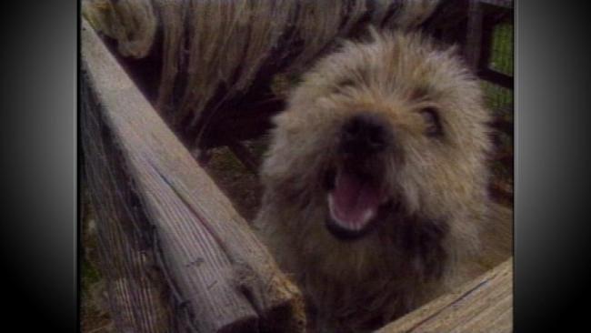 Oklahoma Puppy Mill Bill May Be De-Railed By Legislature