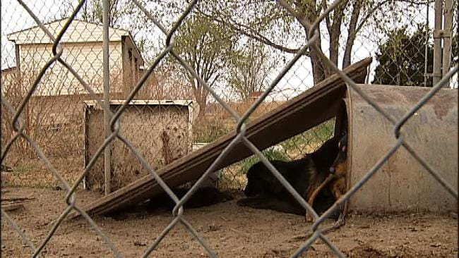 Dozens Of Dogs Found Amid Trash, Feces At Rogers County Home