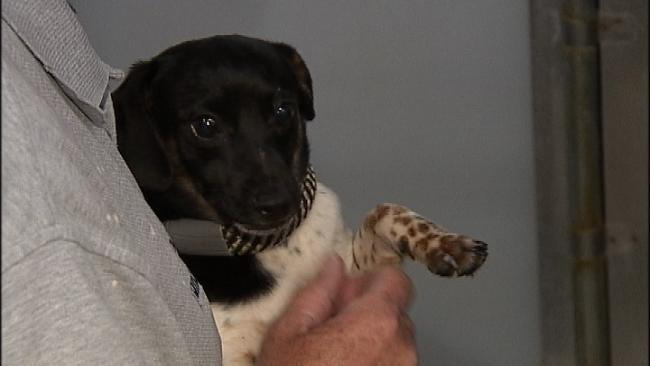 Dogs Rescued In Rogers County Raid To Go Up For Adoption Wednesday