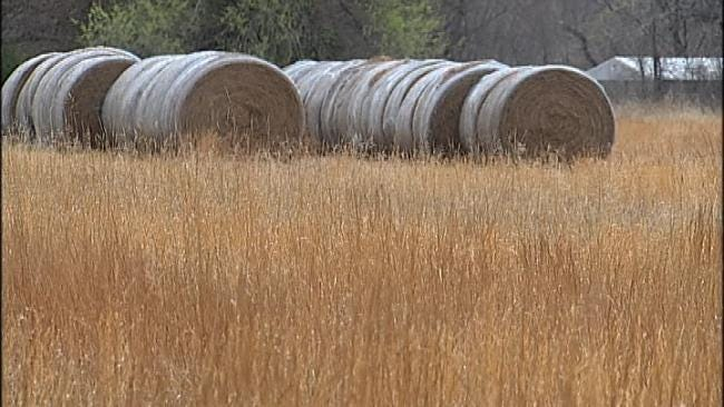 Dwindling Hay Supply Has Oklahoma Ranchers Worried