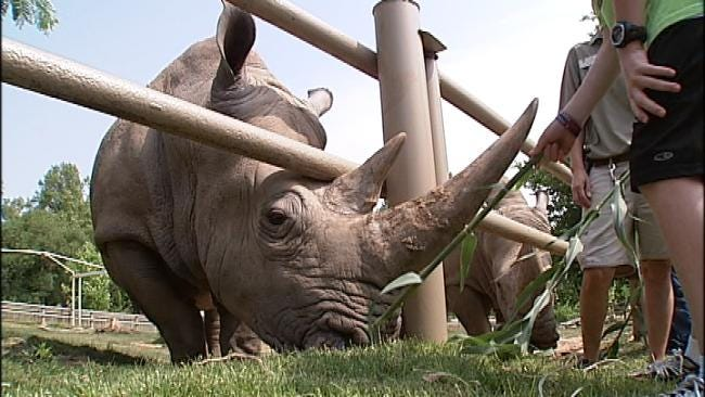 Tulsa Zoo To Host Rhino Awareness Day