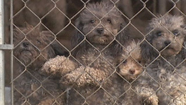 Oklahoma Pet Breeders To Be Regulated