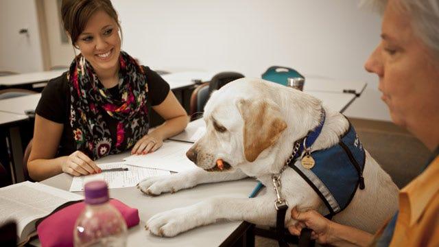 Samson The Service Dog To Graduate With OU-Tulsa Students