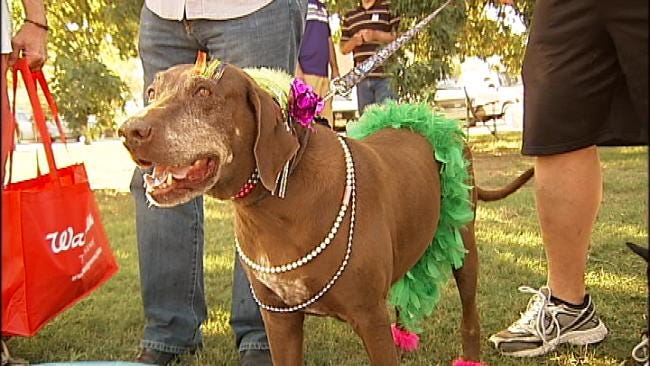 First Annual Paws For AIDS Held In Downtown Tulsa