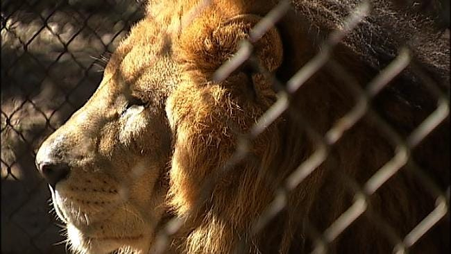 Animal Groups Call For Reform In Oklahoma In Wake Of Ohio Tragedy