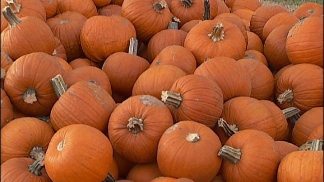 It May Be Slim Pickings At Tulsa-Area Pumpkin Patches
