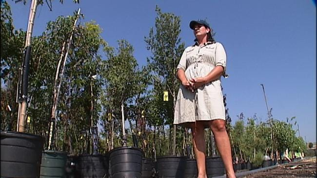 Hulbert Nursery Helps To Re-Plant Joplin With Tree Donations