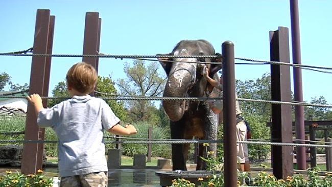 Tulsa Elephants Get A Scrub-Down Before Weekend 'Elebration'