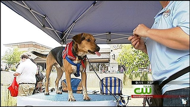 Nice Weather Brings Out Pets, Owners For Woofstock