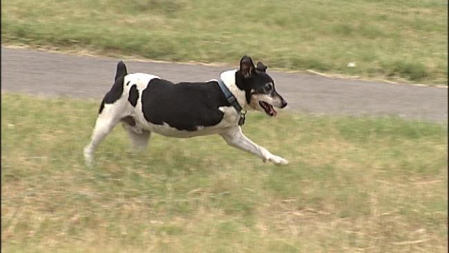 Tulsa Dog Missing A Leg But Not His Spirit