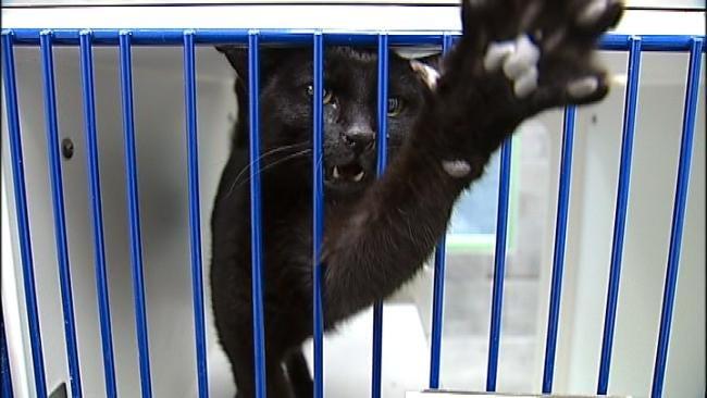 Broken Arrow Opens New Animal Shelter