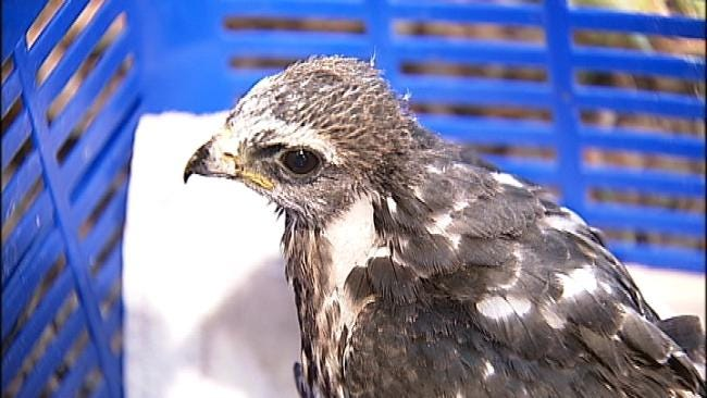 Heat Drives Birds Out Of Nests Before They Can Fly