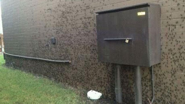Crickets Are Everywhere Across Oklahoma This Summer