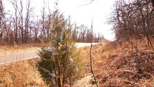 Lonely Little Christmas Tree Brings Holiday Spirit To Coyote Trail