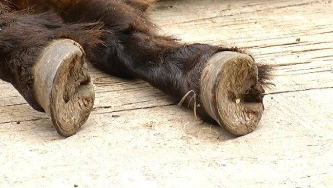 Miniature Horse Found Shot Dead Near Road In Rogers County