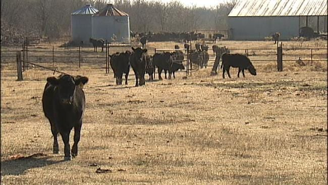 Persistent Drought Threatening Livelihoods Of Oklahoma Ranchers, Farmers