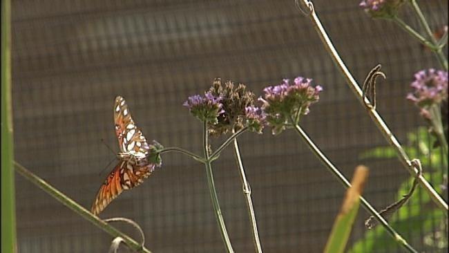 Empty Zoo Exhibit Space Turns Into Vegetable Garden For Animals