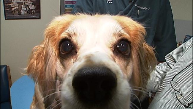 Our Own Rick Wells Takes His Dog 'Dottie' For DNA Test
