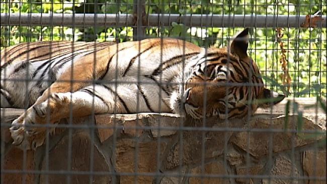 Broken Arrow Exotic Animal Sanctuary May Close This Summer