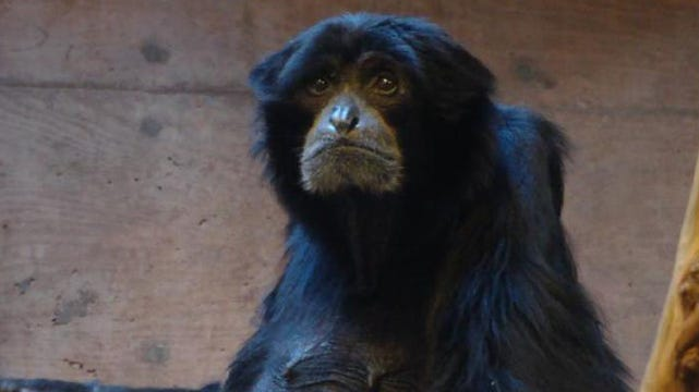 Tulsa Zoo Loses One Of Its Oldest Residents