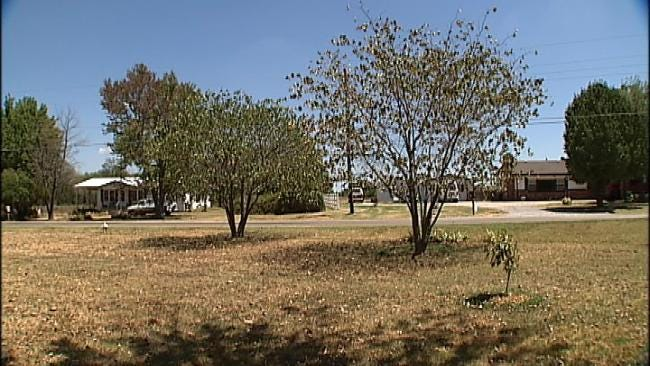 How To Keep Your Trees Alive During Oklahoma's Drought