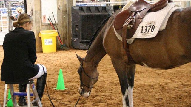 Tulsa County Fairgrounds Hosts Largest Gathering Of Pinto Horses