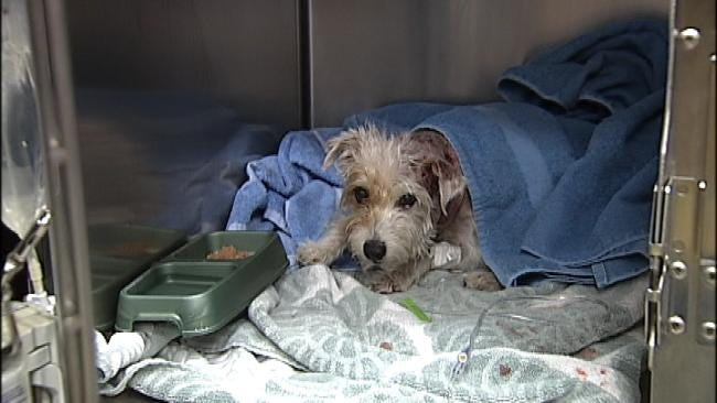 Tulsa Emergency Pet Clinic Operates Animal Ambulance
