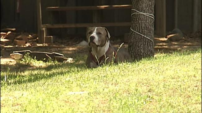 Wagoner County Family Upset After Pitbull Attack