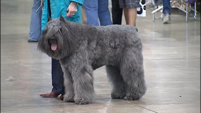 Tulsa Roundup Dog Show This Weekend At Expo Square