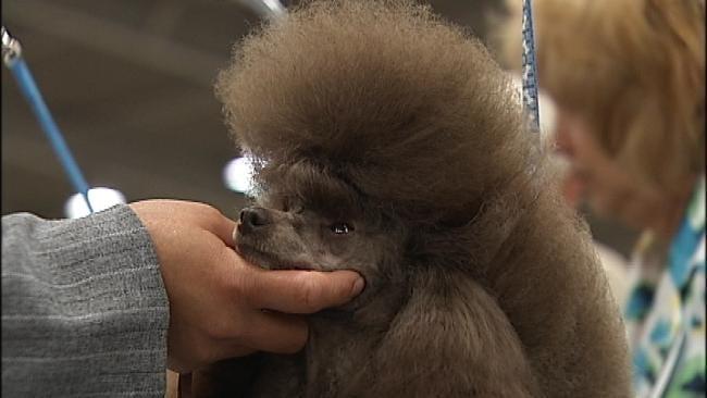 Check Out Free Tulsa Dog Show Through Monday