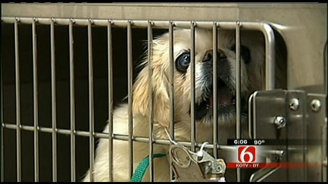 Many In Support Of Oklahoma Pet Breeder Bill