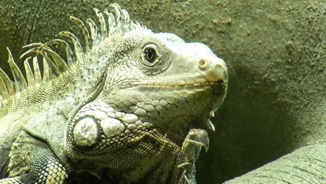 Experience Extreme Amazon Exhibit At Oklahoma Aquarium