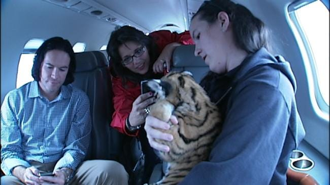Tulsa Tiger Cub Moves To New Zoo In Style