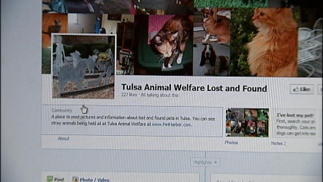 Tulsa Animal Welfare Launches Lost And Found Pets Facebook Page