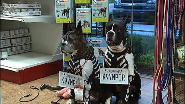 Dozens Of Dogs, Their Owners Take Part In Halloween Costume Contest