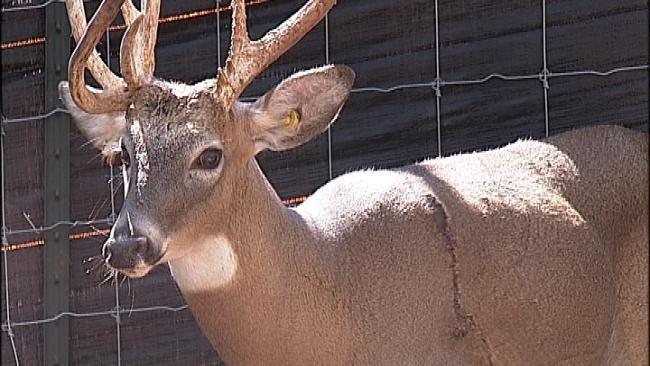 Rogers County Deer Farmer Says Someone Cut Fence, Shot 2 Deer