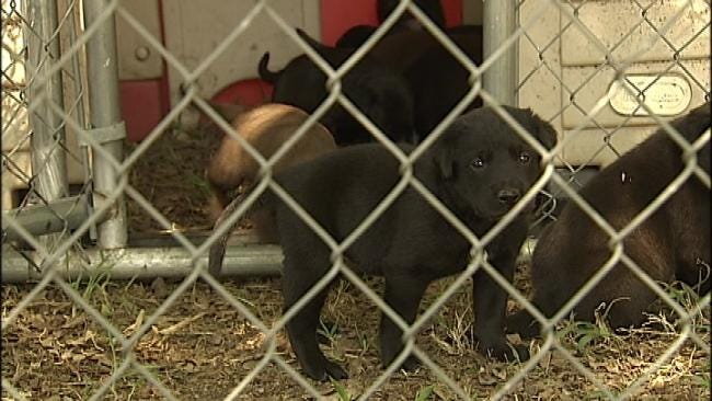 Family Dismayed By Rogers County Dog's Death
