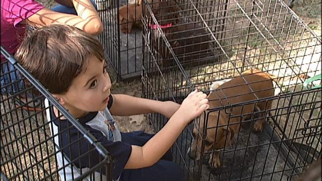 Creek County Dogs Placed With Forever Homes After Wildfires