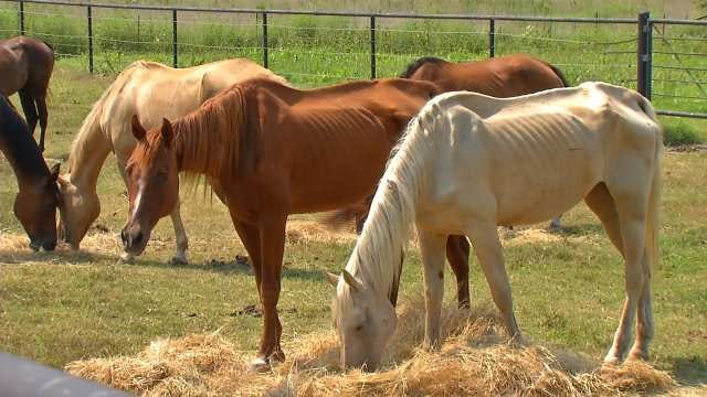 Affidavit: Bartlesville Woman Charged With Animal Cruelty Says Horses Poisoned