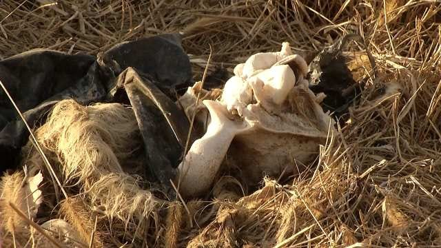 Investigation Begins After Wounded Dogs, Bones Found In Tulsa County