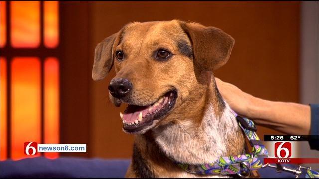 News On 6 Radar The Weather Dog Seeks Votes To Help Animal Welfare