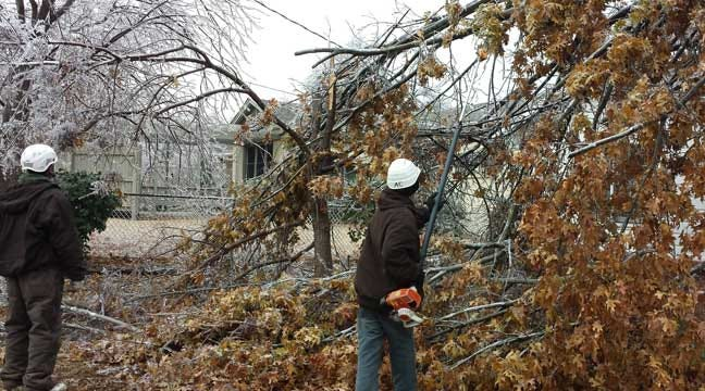 Oklahoma Forestry Services Gives Tips For Saving Trees