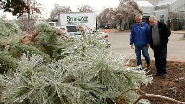 'The Gardener Guy' Offers Tips For Saving Trees Following Ice Storm
