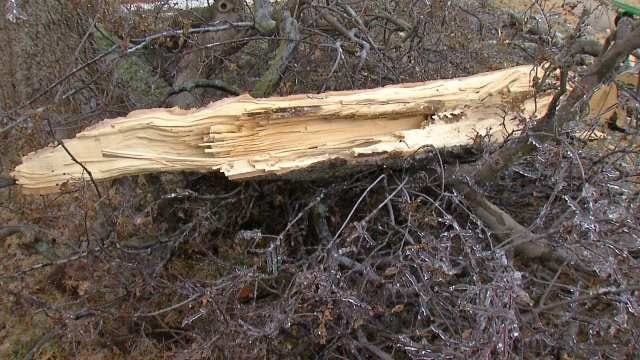 City Of Tulsa Crews Collecting Storm Debris And Christmas Trees