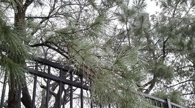 Wintry Mix Ahead For Parts Of Green Country